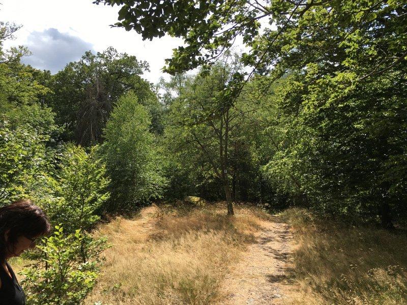 Ein schmaler Pfad im braungelben Gras führt über den Hexentanzplatz zu den Kletterfelsen auf der Wildenburg