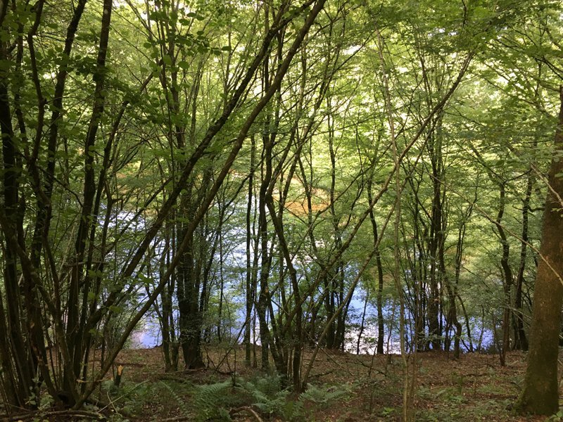 Junge grüne Bäume im Wald, unten ein Fluss, in dem sich der Himmel spielgelt