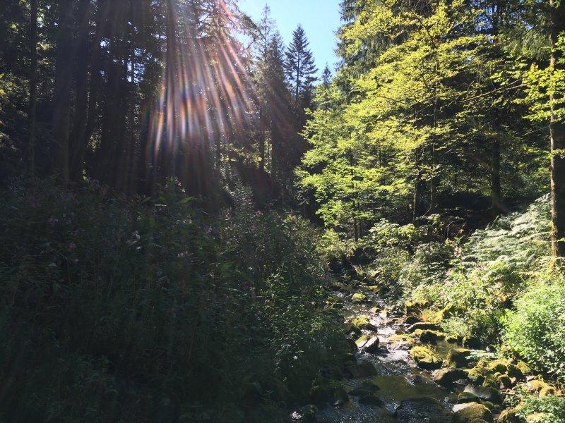 Ein kleiner Bach, links und rechts grünes Gesträuch vor dunklem Tannenhintergrund, Sonnenstrahlen aus blauem HImmel