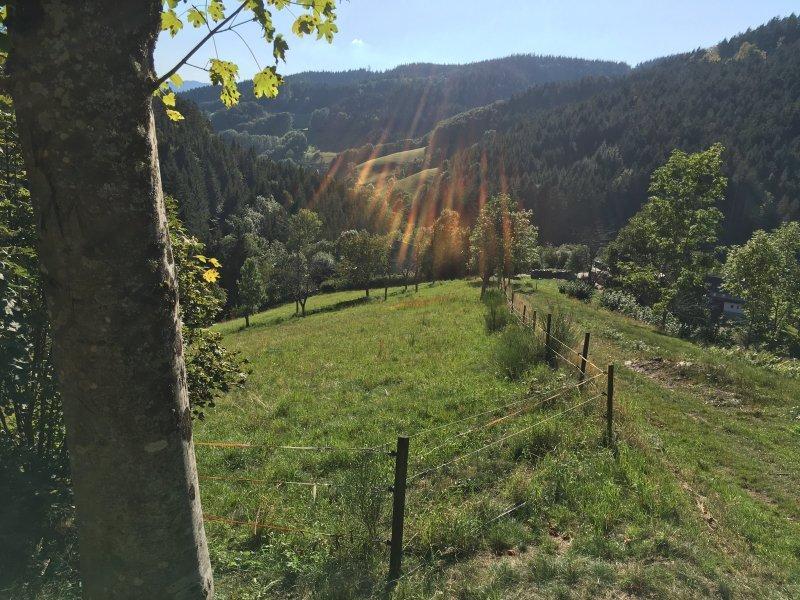 Blick vom Wiesensteig hinüber auf die dunkel bewaldeten Höhen oberhalb von Bad Peterstal-Griesbach