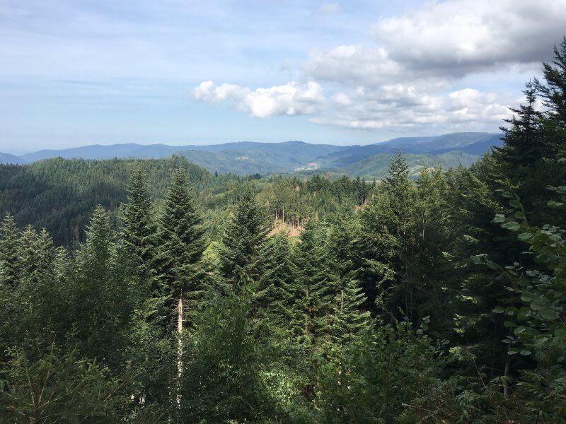 Panoramablick vom Sattelplatz: Der Blick schweift über die Schwarzwaldhöhen bis hinüber zum Rheintal