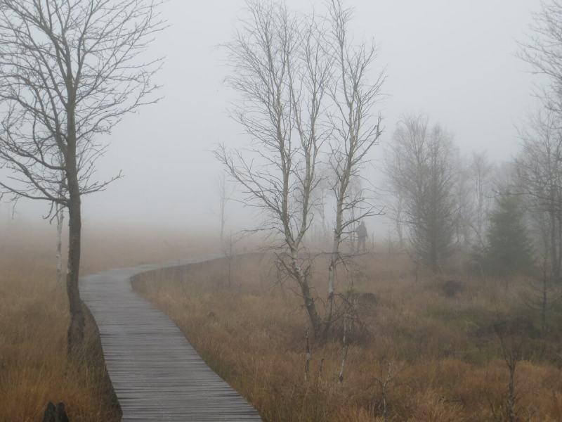 Wanderungen im Venn führen meist über Plankenstege