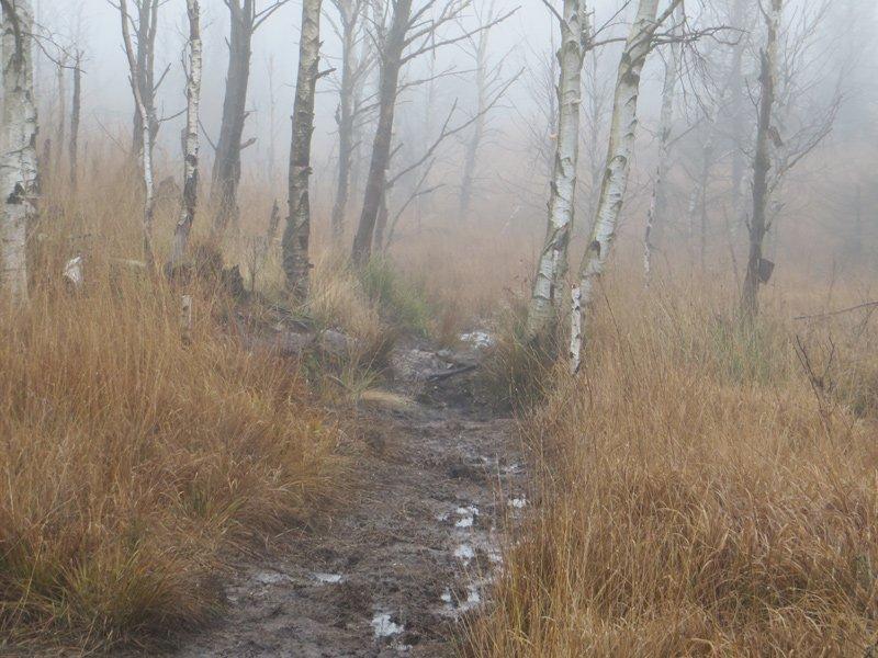 Nebel, Matsch und Regen, Abenteuer auf den Wanderwegen im Hohen Venn