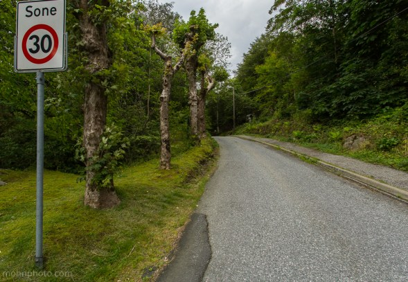 Photo of a speed limit sign and some old trees Laksevåg Gravdal Bergen