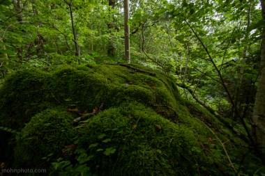 Bilde av en stein dekt av mose