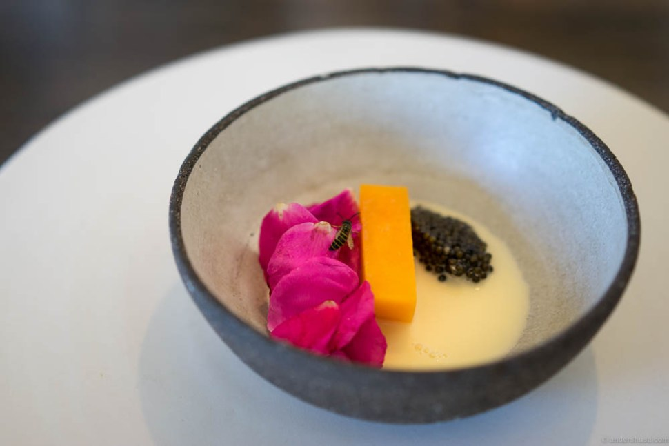 Pumpkin, rose petals & caviar. My dish also got a visit from a little friend, as the bees in the hive outside Noma were acting up