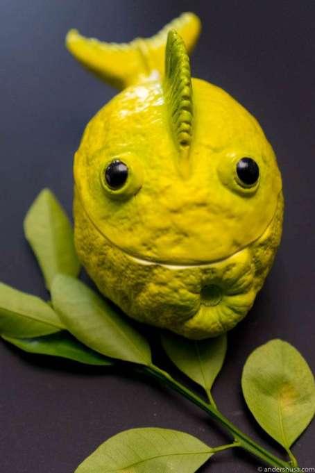 Lemon fish?