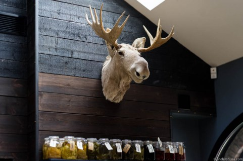 Moose on the wall