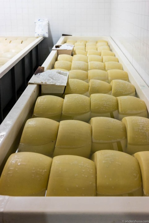 The Parmesan cheese is immersed in a bath of salt brine