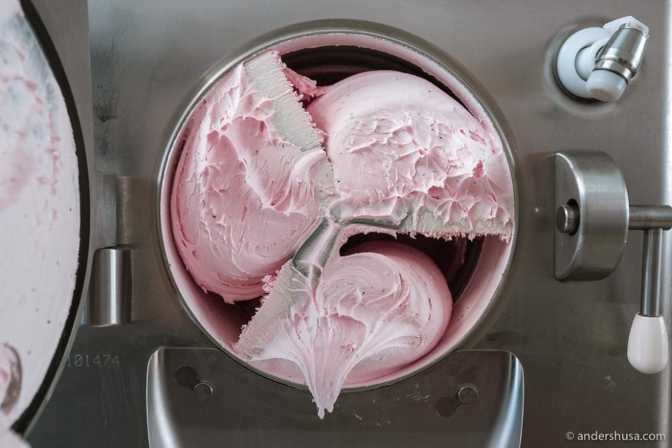 Freshly churned dragonfruit ice cream.
