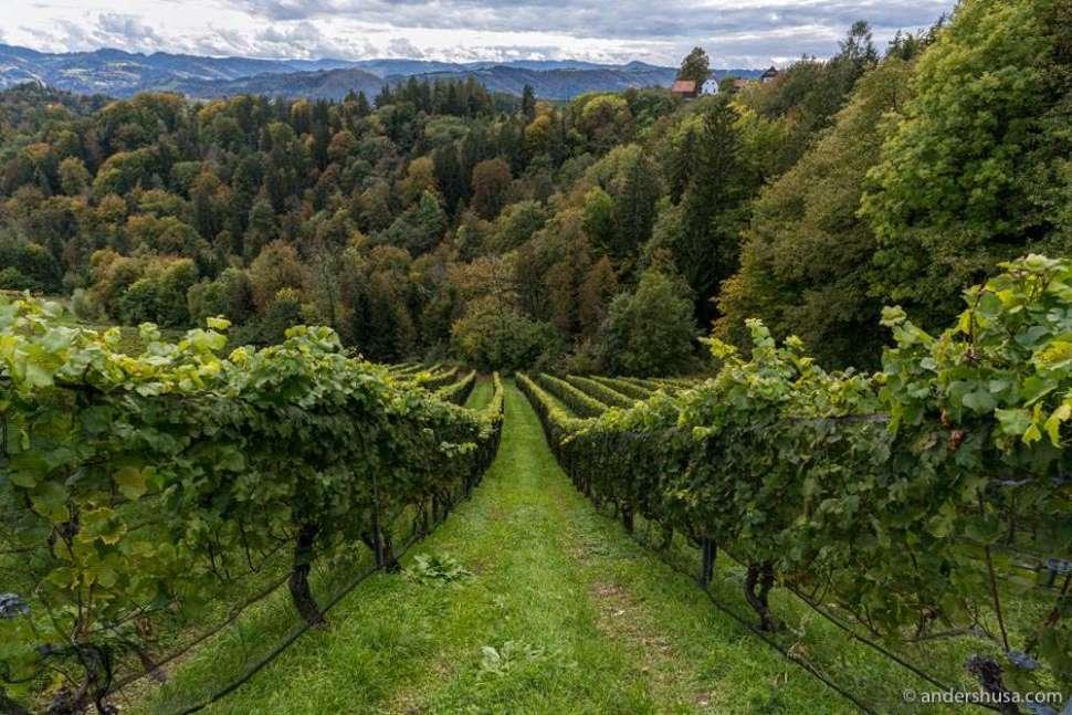 Exploring the beautiful wine regions of Austria.