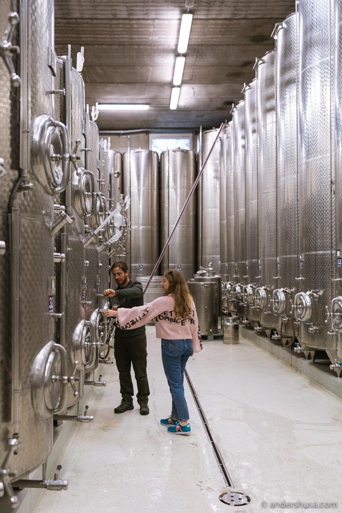 Learning more about the Sattlerhof vinification philosophy in the cellar.