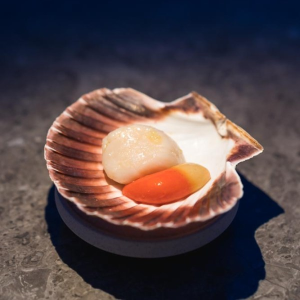 Raw Norwegian scallop and its roe.