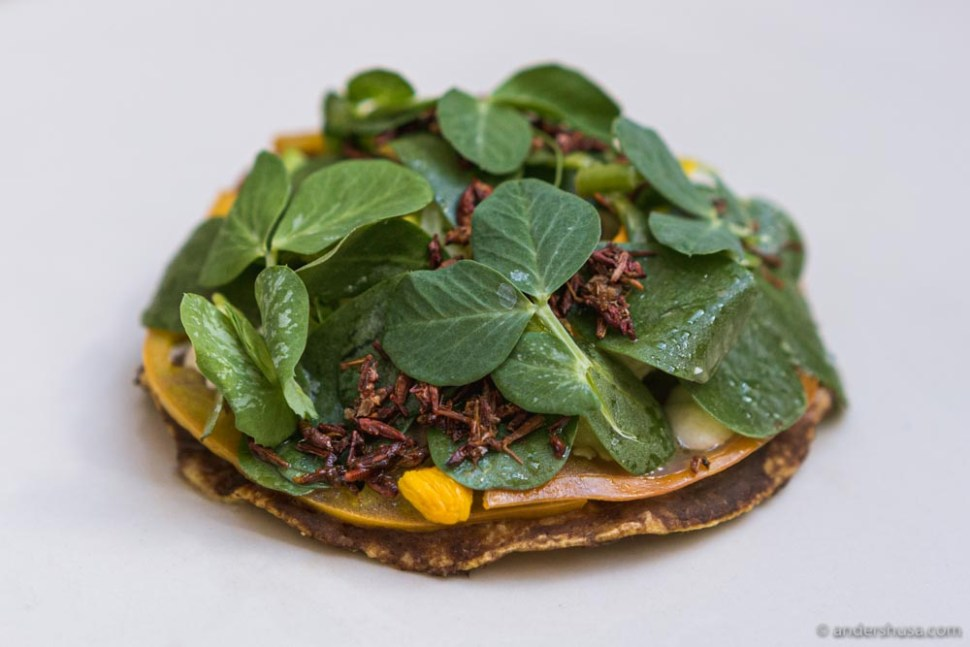 Tlayuda, black beans, cheese, and grasshopper (mais menu).