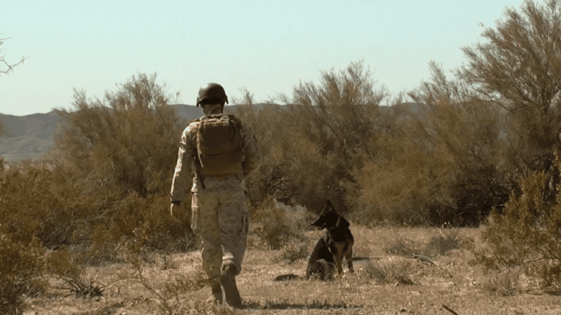 Canine Soldiers review: PTSD for Puppers 2