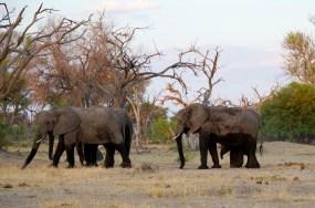 2015-11-3 November - Botswana015