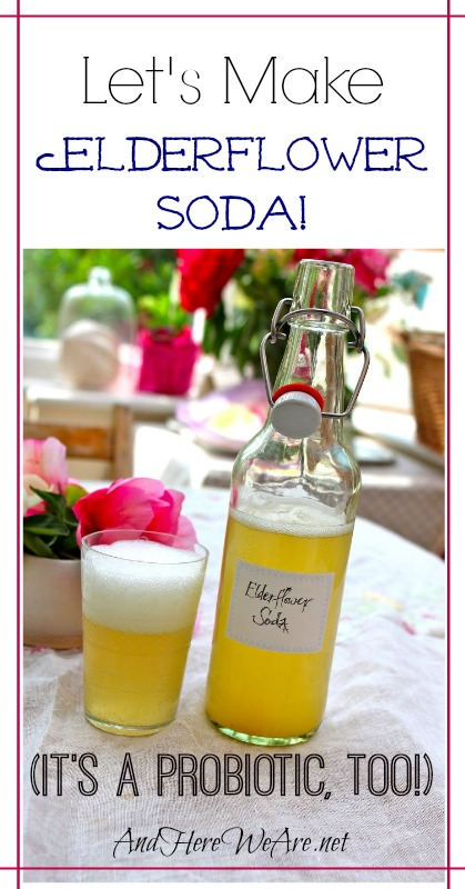 Let's Make Elderflower Soda