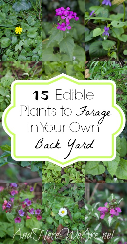 Good Edible Plants In Your Backyard Part - 7: 15 Edible Plants To Forage In Your Own Back Yard