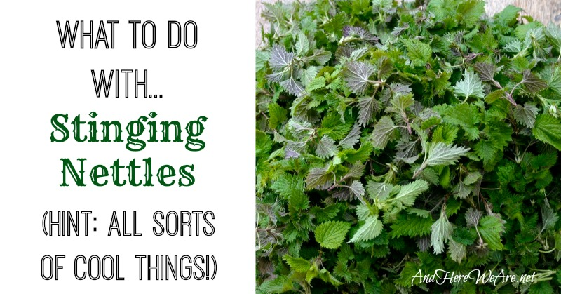 What to do with Stinging Nettles from And Here We Are...