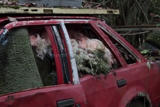 car-plantation28
