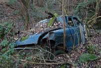 car-plantation51