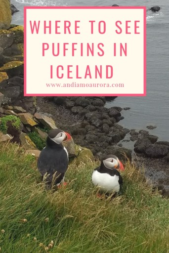 Where to See Puffins in Iceland | Andiamo Aurora | Want to see puffins when you're in Iceland? Get to Látrabjarg Cliffs in the West Fjords. Learn how to get there and what to expect.