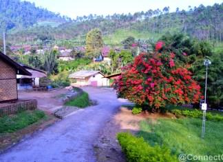 Wisata Kebun Kina Bukit Unggul Bandung