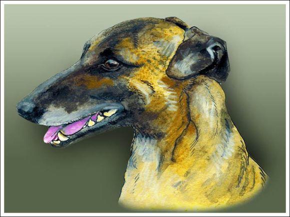 greyhound_web