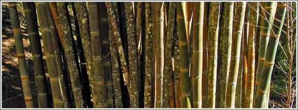 wall_of_bamboo