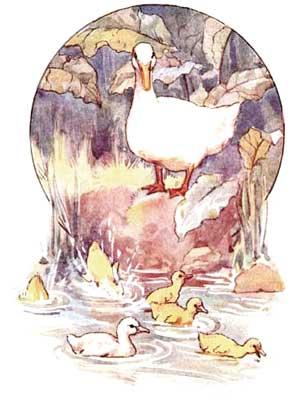 Ilustratie cu ratele pe lac