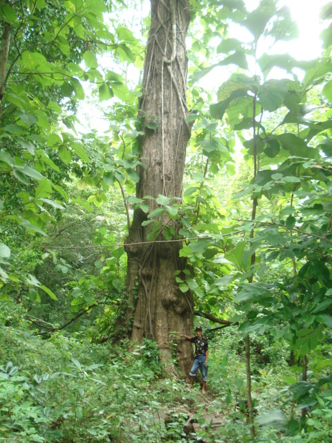 Persebaran Hutan Musim Di Indonesia : persebaran, hutan, musim, indonesia, FLORA, Geografi, Gunungkidul