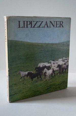 Lipizzaner