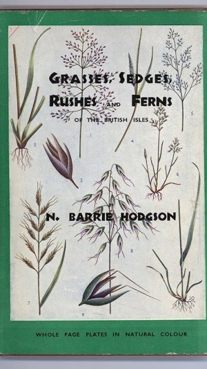 Grasses, Sedges, Rushes and Ferns of the British Isles