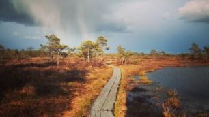 vihmkakerdaja