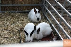 Conejos en la granja-escuela