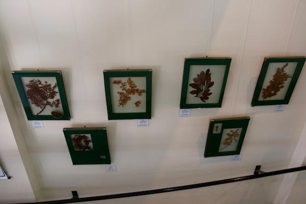 Exposición Centro Visitantes Alakush