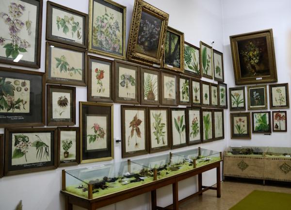 Exposiciones Museo Botánico