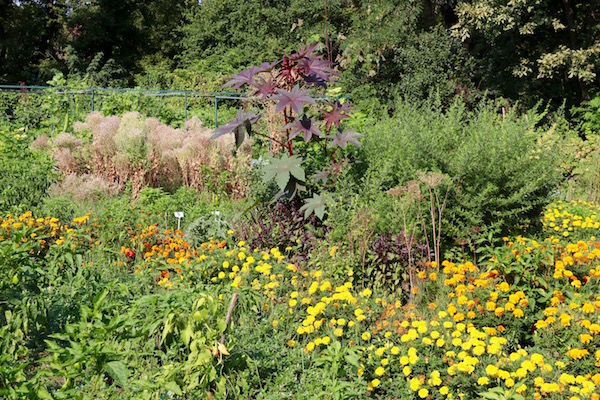 Plantas parque Botánico