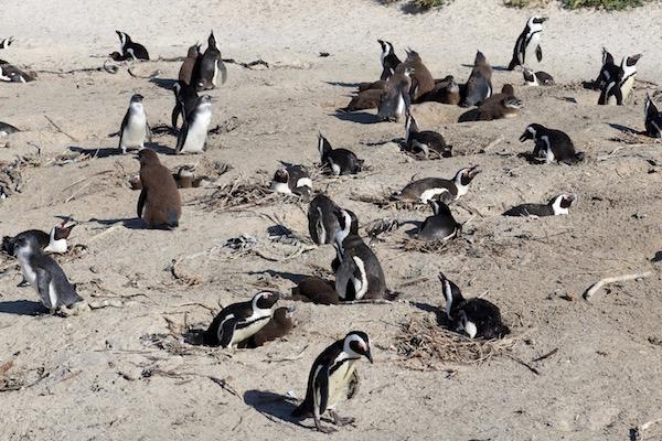 Colonia Pingüinos.
