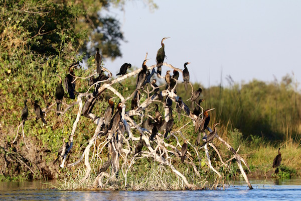 Pájaros árbol