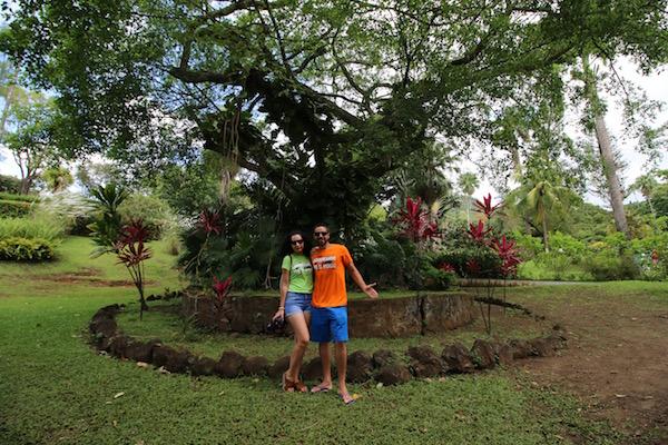 Árboles Jardín botánico San Vicente y las Granadinas