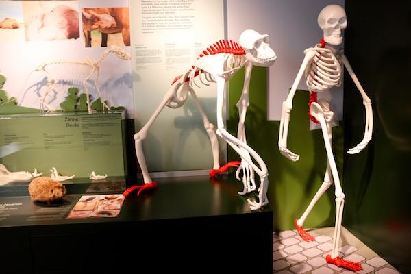 Exposición Museo Nacional de Historia Natural.