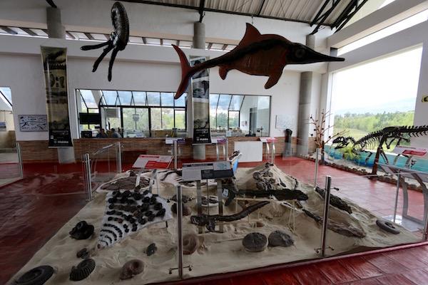 Exposición del Centro de Interpretación Paleontológica.