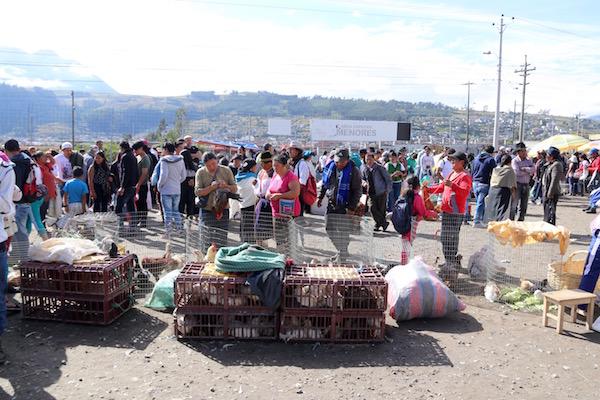 Mercado de animales Otavalo.