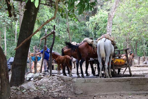 Caballos Parque Nacional Tayrona.