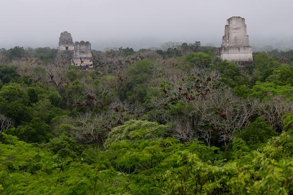 Panorámicas desde templo IVtambién llamado de la Serpiente Bicéfala.