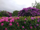 Rhododendron-Land