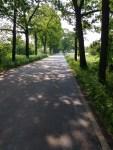 Baumallee in Brandenburg, zweite Woche auf der Radtour