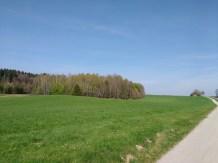 Grüne Wiese vor blauem Himmel mit einem Radweg