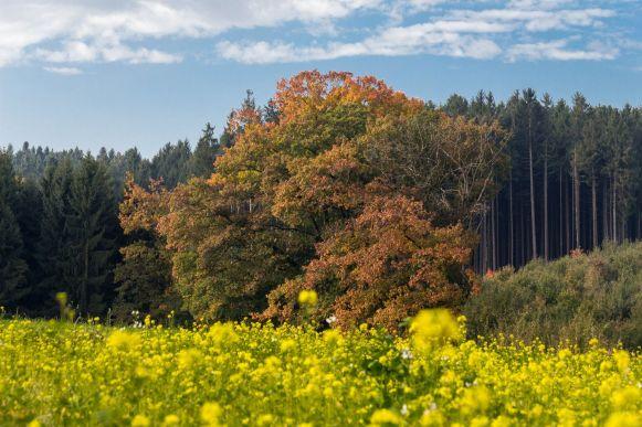 Herbststimmung im Hangmaul (bei Schwindegg)